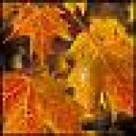 Holzmichel1701